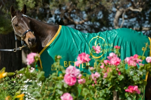 Roses and Winners at Flemington