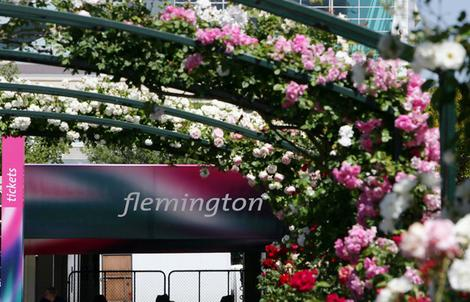 Arch of roses at Flemington entry gate