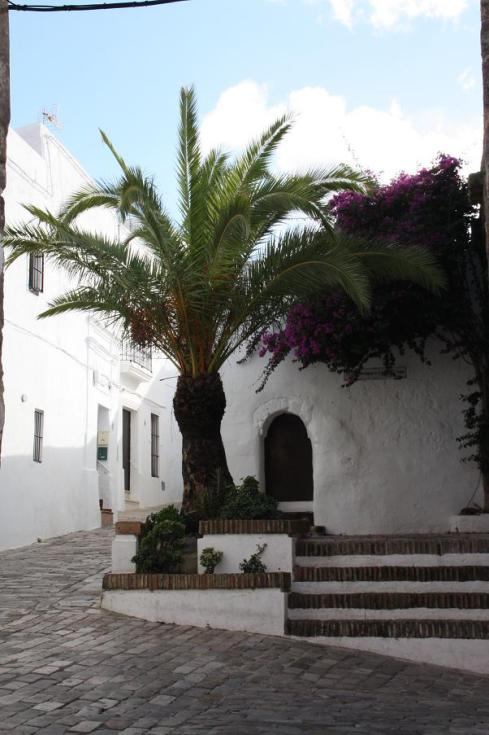 Finding a place for green in Vejer de la Frontera - October 2012