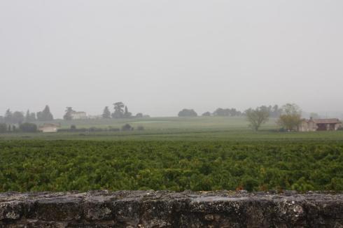 Vineyards near St. Emilion France - October 2012