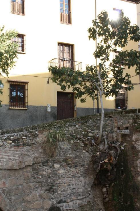 Very determined tree - Granada Spain 2012