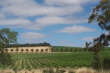South Australia Vineyards