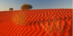 The Red Dirt of the Great Australian Desert