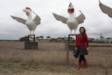 Happy Hens and Happy Chook